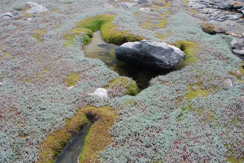 April newsletter greeninc landscape architecture for Greeninc landscape architecture
